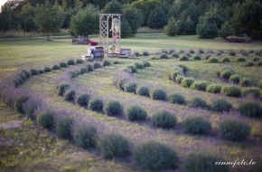 "Stop and Workshop ""LavenderVilla"""