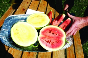 Rolands Dambis` Watermelon Farm